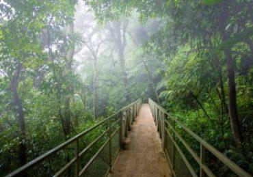Monteverde-370x259