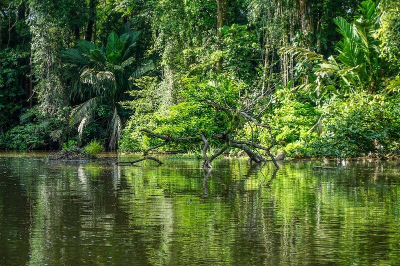 Tag 2 Nationalpark Tortuguero Bootsfahrt