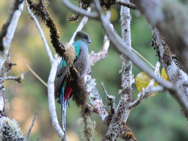 Quetzalwanderung