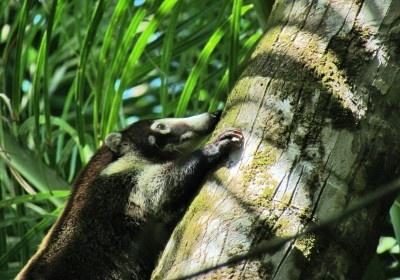 Nationalpark Corcovado
