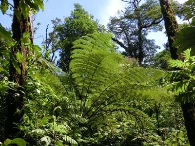 Monteverde Nationalpark